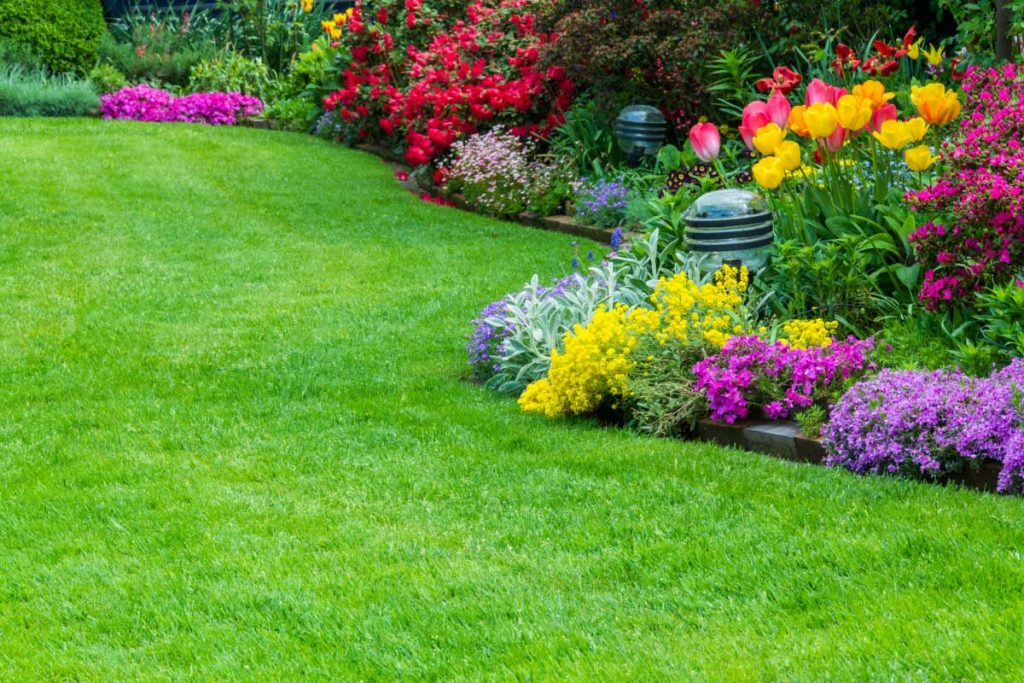 GrassRoots-Turf-Care-and-Treatment-Service